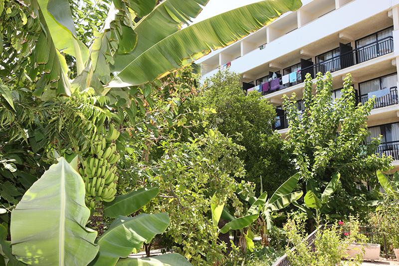 Veronica Hotel Hotel In Paphos